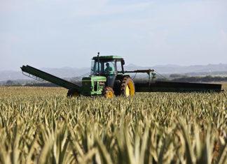 Uprawa zbóż w XXI wieku – czy to się opłaca?